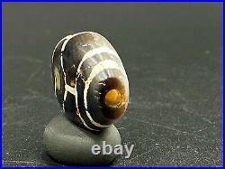 Old Ancient Himalayan Indo-Tibetan Phum Dzi Bead with rare two color pattern